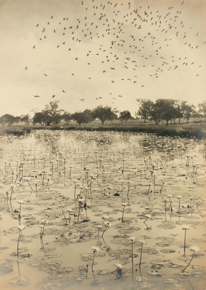 'Haunt of the Wild Duck' [Northern Territory, Australia, 1914]. A vintage sepia-toned gelatin silver print (610 × 438 mm) mounted on the original flush-cut thick cardboard. Frank HURLEY, Australia.