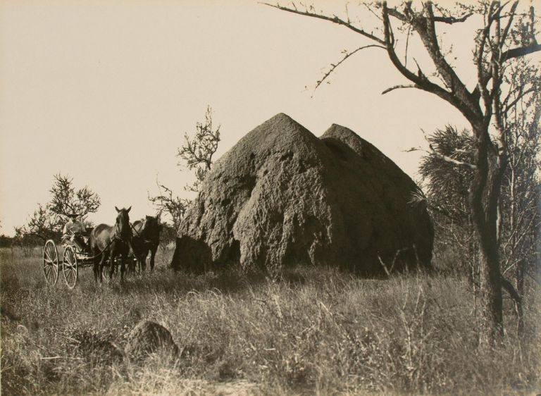 'A Monster Anthill' [Northern Territory, Australia, 1914]. Frank HURLEY.