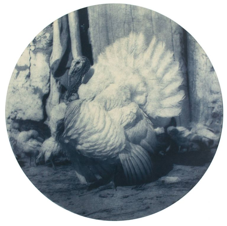 'The Turkey'. A vintage carbon print (visible image size, a 290 mm diameter circle) on the original paper mount. John KAUFFMANN.