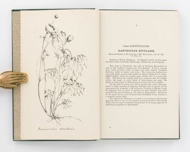 Plants reputed Poisonous and Injurious to Stock. F. Manson BAILEY, Patrick Robertson GORDON.