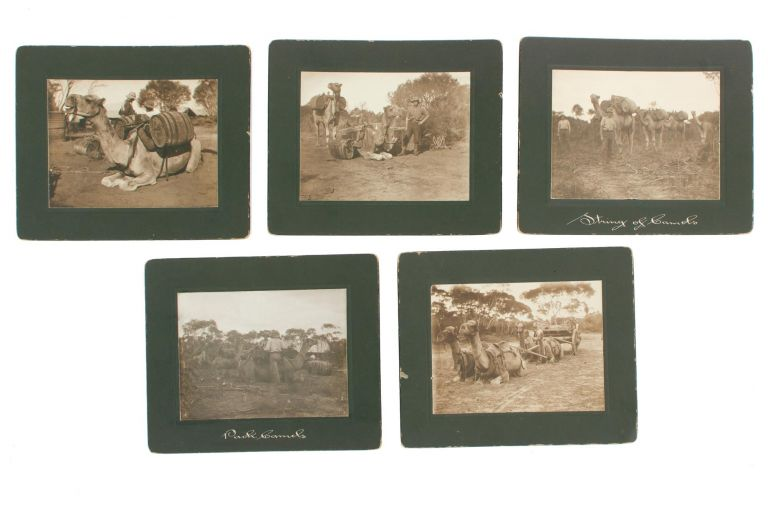 A matching group of five vintage sepia-toned gelatin silver photographs (each 82 × 108 mm, on individual mounts) depicting the life of the camel as a beast of burden. Camels.