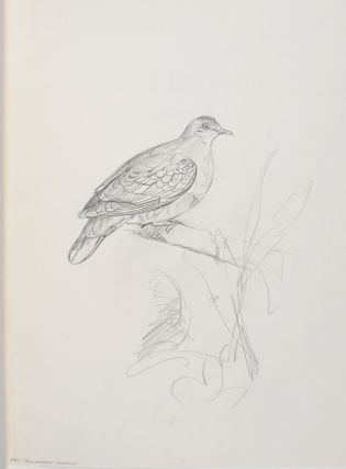 Eight limited edition volumes on Australian birds by Frank Morris are offered as one lot. The collection comprises 'Birds of Prey of Australia' (1973); 'Pigeons and Doves of Australia' (1976); 'Finches of Australia - a Folio' (1976); 'Impressions of Waterfowl of Australia' (1977); 'Birds of the Australian Swamps', Volume 1 [and] Volume 2 (1978); 'Pencil Drawings, 1969-1978' (1978); and 'Robins and Wrens of Australia - a Selection' (1979)
