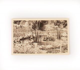 'Botanical Gardens, Adelaide, South Australia'. A nineteenth-century photograph of a pond and active fountain. Adelaide Botanic Gardens.