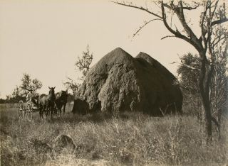 'A Monster Anthill' [Northern Territory, Australia, 1914]. Frank HURLEY