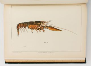 The American Lobster. A Study of its Habits and Development. [Contained in] 'Bulletin of the United States Fish Commission', Volume 15, 1895