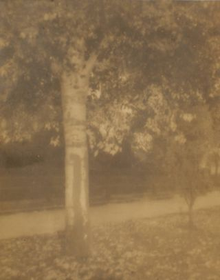 'Golden Autumn'. A vintage gelatin silver photograph (visible image size 181 × 144 mm). John...