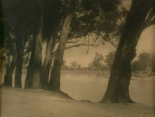 Riverbank Gums. A vintage gelatin silver photograph (visible image size 175 × 237 mm). John KAUFFMANN.