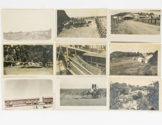A group of seven postcard-format gelatin silver photographs showing scenes of the cattle trade...