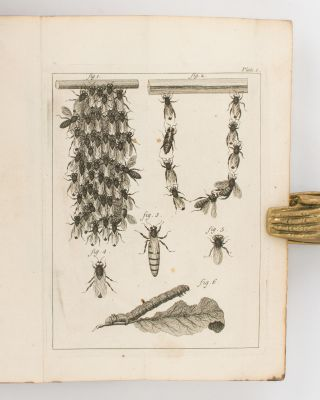 The Natural History of Bees. Containing an Account of their Production, their Oeconomy, the Manner of their making Wax and Honey, and the best Methods for the Improvement and Preservation of them.. Translated from the French