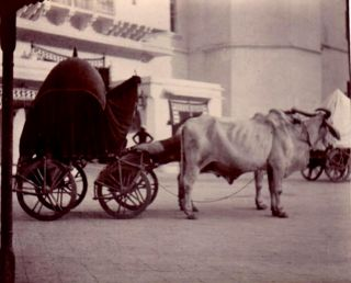 A large collection of Edwardian snapshots of travels in India, China and Central Asia